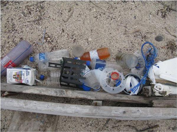 Lunchsyssla: skräpinsamling på stranden. Foto: Beate Hillmann, SLU.