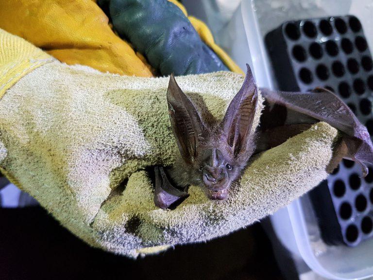 Bat samling